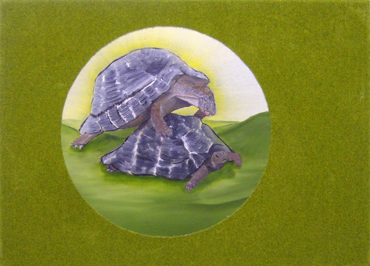 Turtles reproducing, oil and mixed media on canvas, 50cmx70cm, 2008